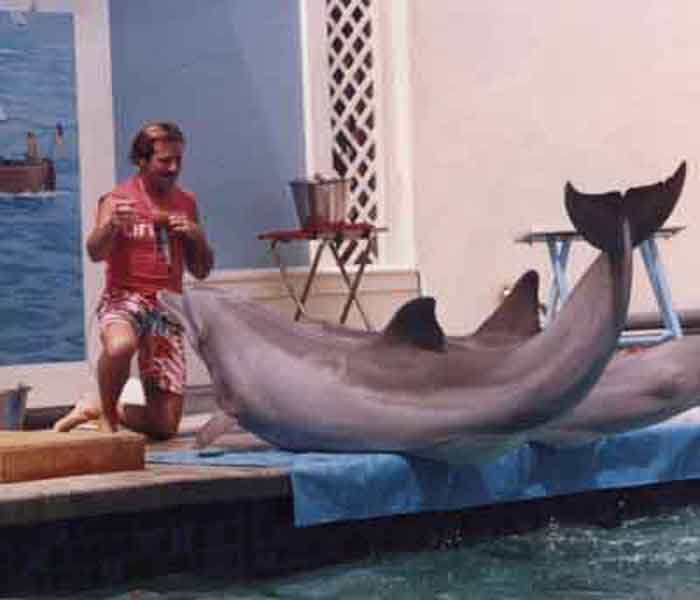 Joel Silverman With Two Dolphins