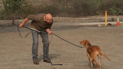 Joel Silverman On The Set Training Dogs For Films And Commercials