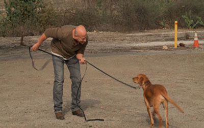 Joel Silvermans Dog Training Tips