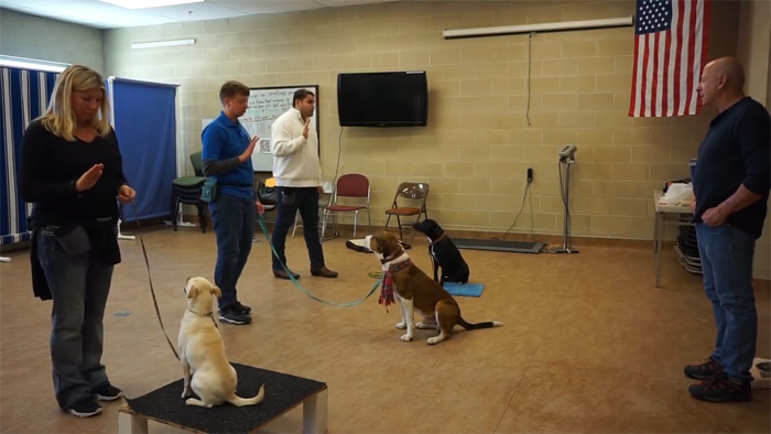 Joel Silvermans Dog Trainer Certification Courses