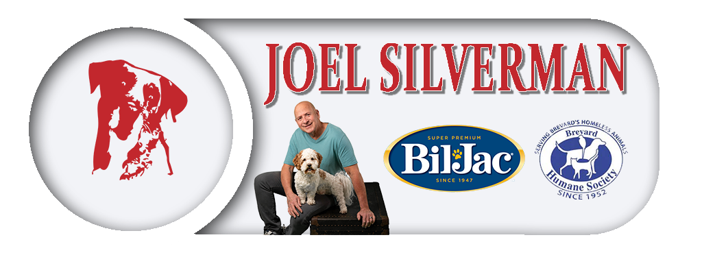 Official Joel Silverman Website